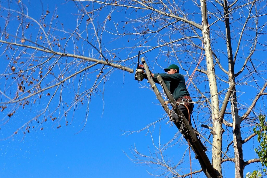 Contact Us-Kendall Lakes FL Tree Trimming and Stump Grinding Services-We Offer Tree Trimming Services, Tree Removal, Tree Pruning, Tree Cutting, Residential and Commercial Tree Trimming Services, Storm Damage, Emergency Tree Removal, Land Clearing, Tree Companies, Tree Care Service, Stump Grinding, and we're the Best Tree Trimming Company Near You Guaranteed!