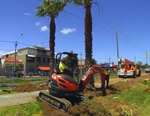 Palm Tree Removal-Kendall Lakes FL Tree Trimming and Stump Grinding Services-We Offer Tree Trimming Services, Tree Removal, Tree Pruning, Tree Cutting, Residential and Commercial Tree Trimming Services, Storm Damage, Emergency Tree Removal, Land Clearing, Tree Companies, Tree Care Service, Stump Grinding, and we're the Best Tree Trimming Company Near You Guaranteed!