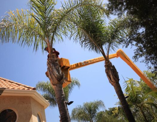 Palm Tree Trimming-Kendall Lakes FL Tree Trimming and Stump Grinding Services-We Offer Tree Trimming Services, Tree Removal, Tree Pruning, Tree Cutting, Residential and Commercial Tree Trimming Services, Storm Damage, Emergency Tree Removal, Land Clearing, Tree Companies, Tree Care Service, Stump Grinding, and we're the Best Tree Trimming Company Near You Guaranteed!