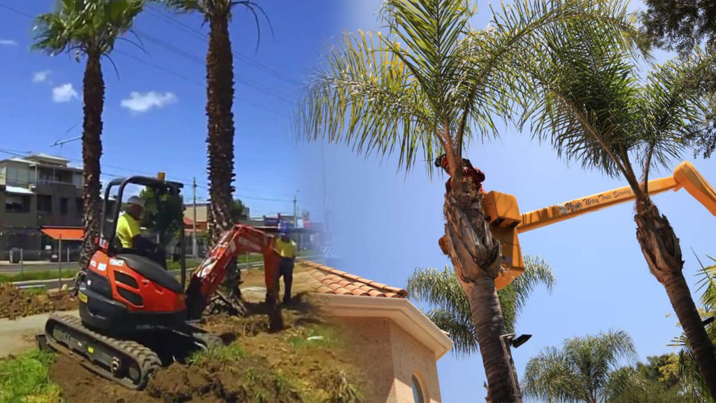 Palm tree trimming & palm tree removal-Kendall Lakes FL Tree Trimming and Stump Grinding Services-We Offer Tree Trimming Services, Tree Removal, Tree Pruning, Tree Cutting, Residential and Commercial Tree Trimming Services, Storm Damage, Emergency Tree Removal, Land Clearing, Tree Companies, Tree Care Service, Stump Grinding, and we're the Best Tree Trimming Company Near You Guaranteed!