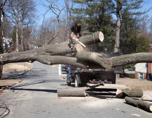 Residential Tree Services-Kendall Lakes FL Tree Trimming and Stump Grinding Services-We Offer Tree Trimming Services, Tree Removal, Tree Pruning, Tree Cutting, Residential and Commercial Tree Trimming Services, Storm Damage, Emergency Tree Removal, Land Clearing, Tree Companies, Tree Care Service, Stump Grinding, and we're the Best Tree Trimming Company Near You Guaranteed!