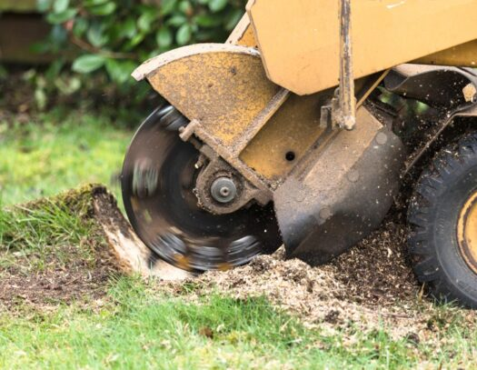 Stump Grinding-Kendall Lakes FL Tree Trimming and Stump Grinding Services-We Offer Tree Trimming Services, Tree Removal, Tree Pruning, Tree Cutting, Residential and Commercial Tree Trimming Services, Storm Damage, Emergency Tree Removal, Land Clearing, Tree Companies, Tree Care Service, Stump Grinding, and we're the Best Tree Trimming Company Near You Guaranteed!