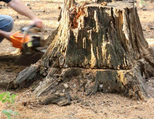 Stump Removal-Kendall Lakes FL Tree Trimming and Stump Grinding Services-We Offer Tree Trimming Services, Tree Removal, Tree Pruning, Tree Cutting, Residential and Commercial Tree Trimming Services, Storm Damage, Emergency Tree Removal, Land Clearing, Tree Companies, Tree Care Service, Stump Grinding, and we're the Best Tree Trimming Company Near You Guaranteed!