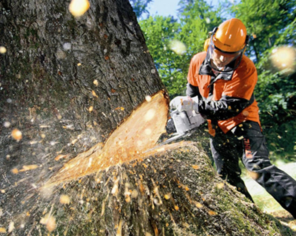 Tree Cutting-Kendall Lakes FL Tree Trimming and Stump Grinding Services-We Offer Tree Trimming Services, Tree Removal, Tree Pruning, Tree Cutting, Residential and Commercial Tree Trimming Services, Storm Damage, Emergency Tree Removal, Land Clearing, Tree Companies, Tree Care Service, Stump Grinding, and we're the Best Tree Trimming Company Near You Guaranteed!