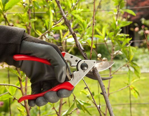 Tree Pruning-Kendall Lakes FL Tree Trimming and Stump Grinding Services-We Offer Tree Trimming Services, Tree Removal, Tree Pruning, Tree Cutting, Residential and Commercial Tree Trimming Services, Storm Damage, Emergency Tree Removal, Land Clearing, Tree Companies, Tree Care Service, Stump Grinding, and we're the Best Tree Trimming Company Near You Guaranteed!